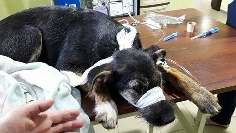 Зоозахисники Конотопа благають про допомогу: нічим платитии за операції тваринкам!, фото-1