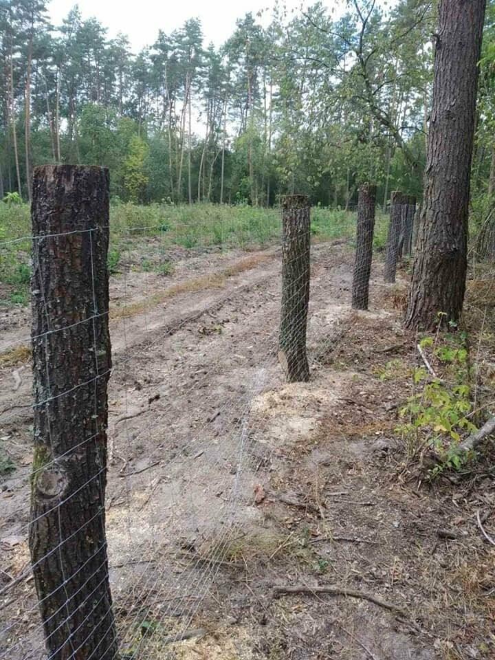 У Конотопському лісгоспі встановили сітки для захисту молодих дерев від тварин, фото-1