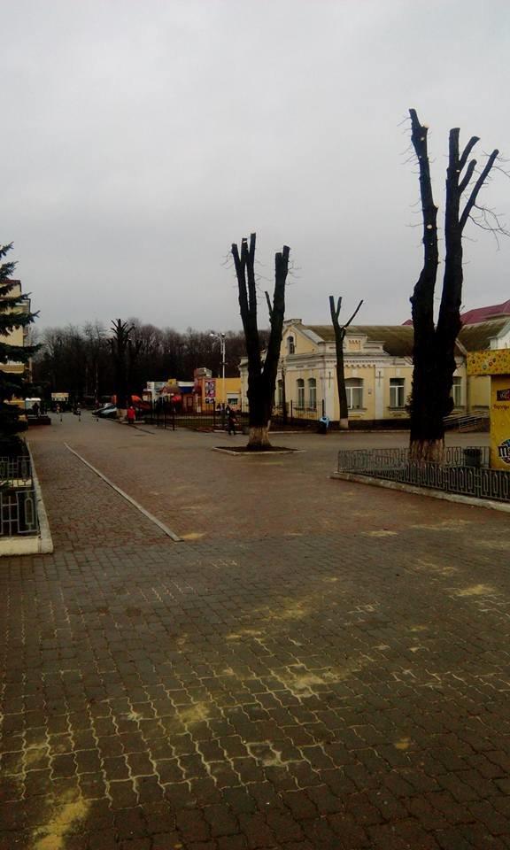 Голова ЖКГ Вадим Фещенко пояснив, чому обрізають дерева в центрі Конотопа, фото-1