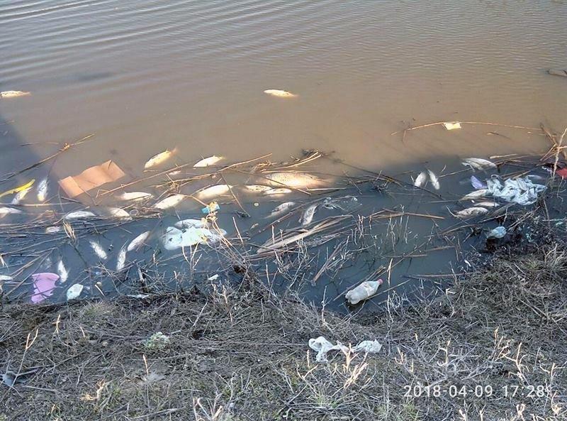 Конотопські рибалки прибрали водойму біля Меморіалу Слави, фото-1