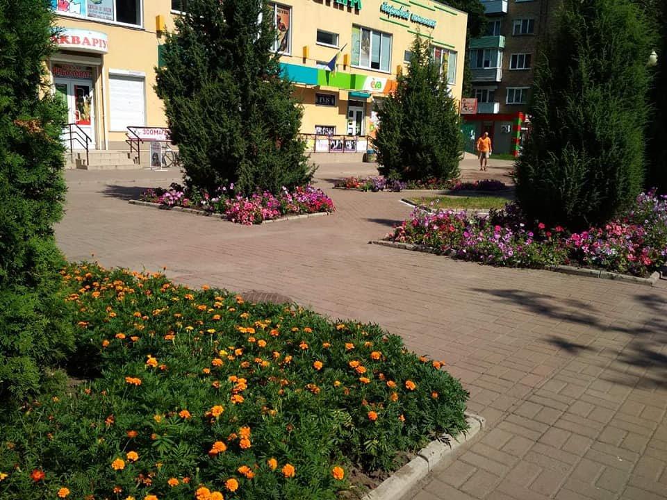 У Конотопі приводять до ладу квітники, фото-4