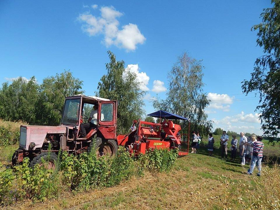 На Конотопщині нагородили переможців полуничних конкурсів , фото-1