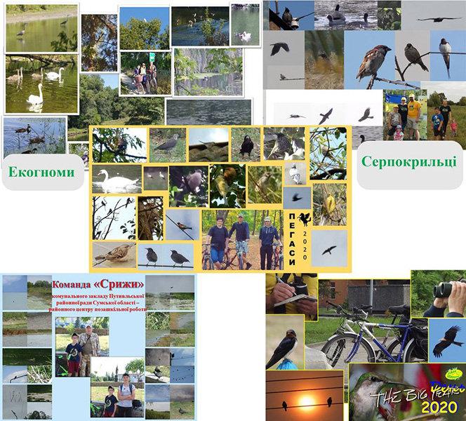 На Конотопщині пройшли змагання  зі спортивної орнітології, фото-1