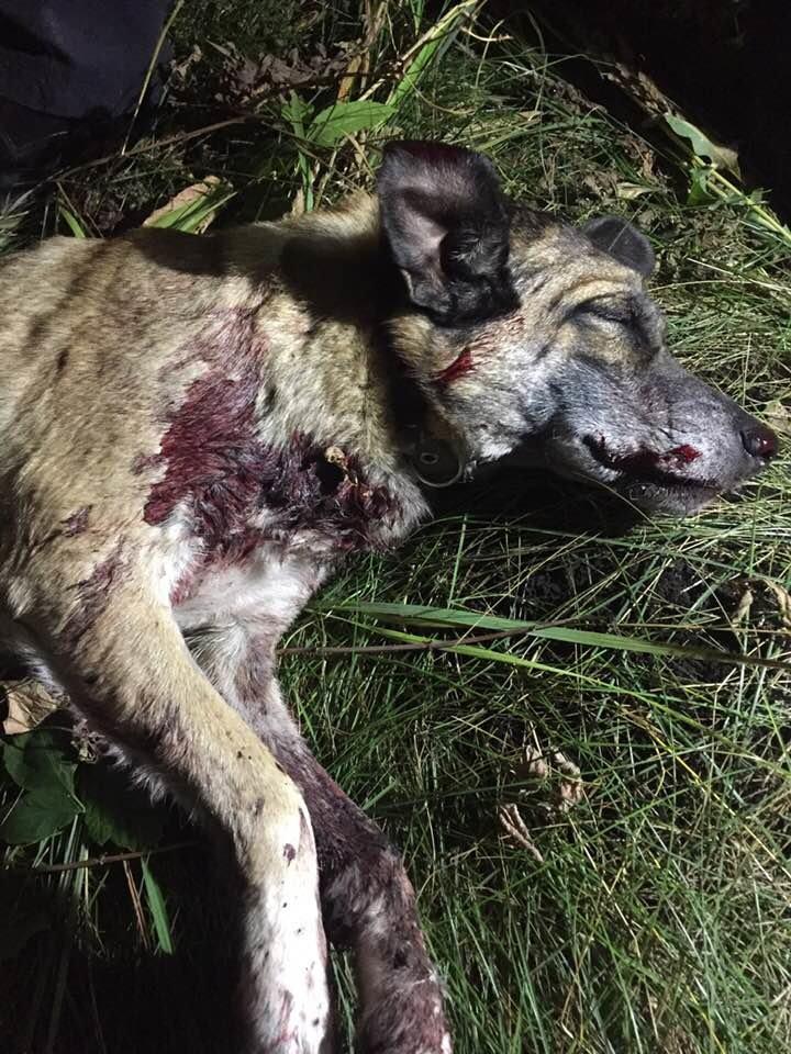 На Сумщині лісник застрелив із мисливської рушниці собаку, фото-2