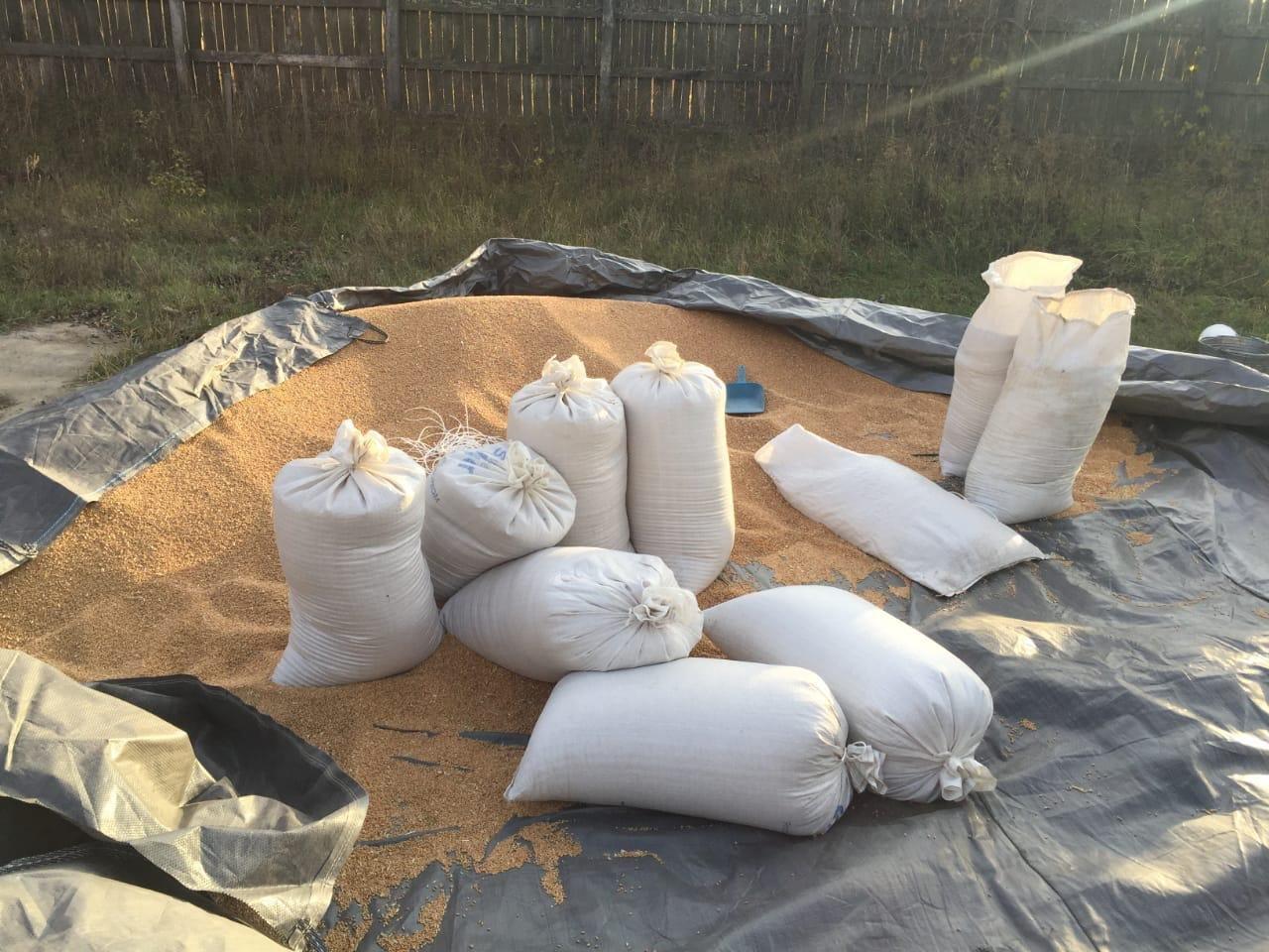 Поліція Сумщини викрила водія, який вкрав 10 тонн зерна, фото-1