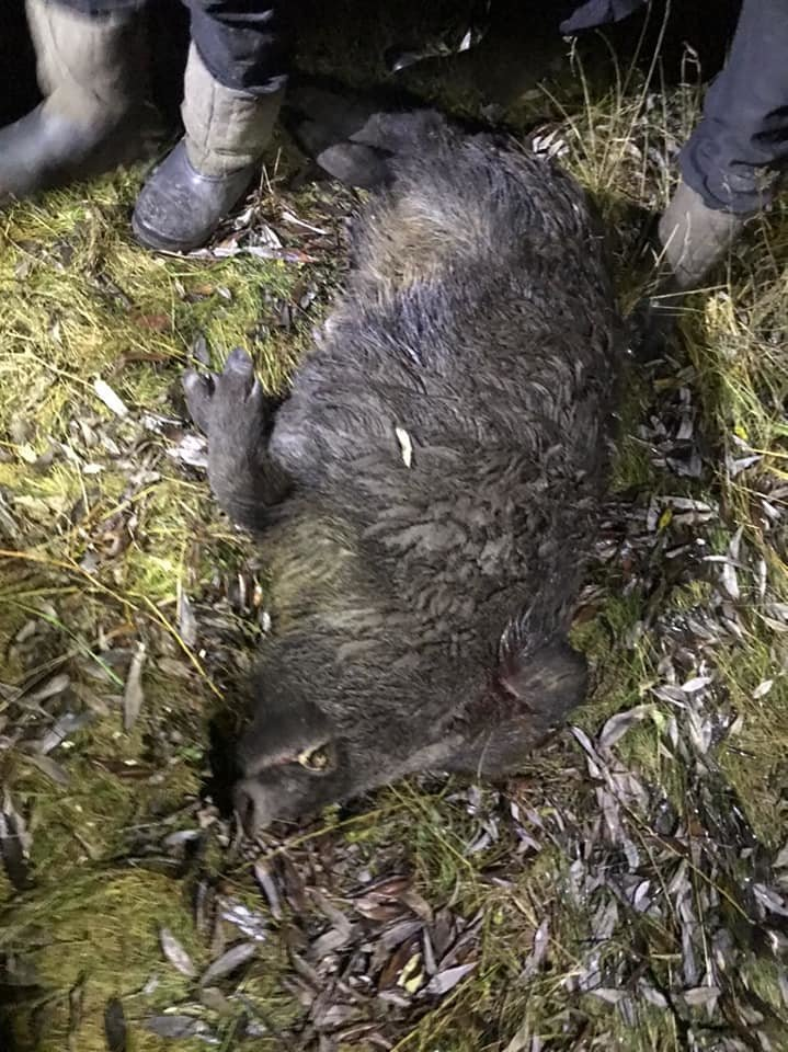 На Конотопщині браконьєри вбили дикого кабана, фото-1