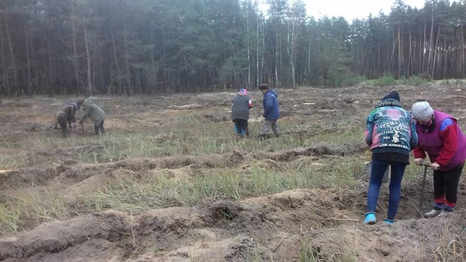 У Конотопському лісгоспі триває кампанія з посадки дерев, фото-2