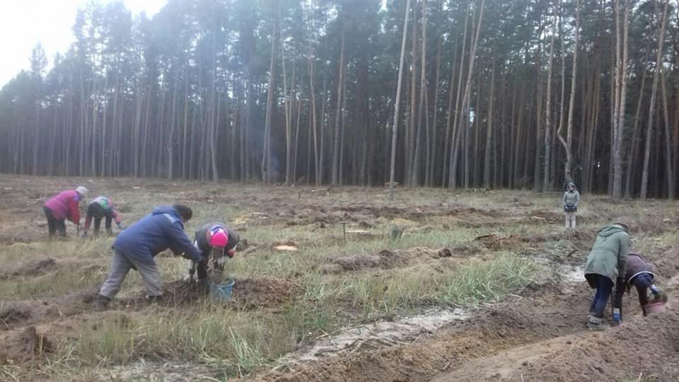У Конотопському лісгоспі триває кампанія з посадки дерев, фото-3
