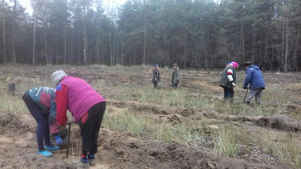 У Конотопському лісгоспі триває кампанія з посадки дерев, фото-4
