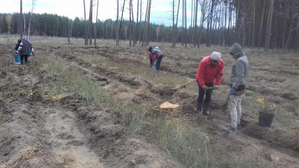 У Конотопському лісгоспі триває кампанія з посадки дерев, фото-5