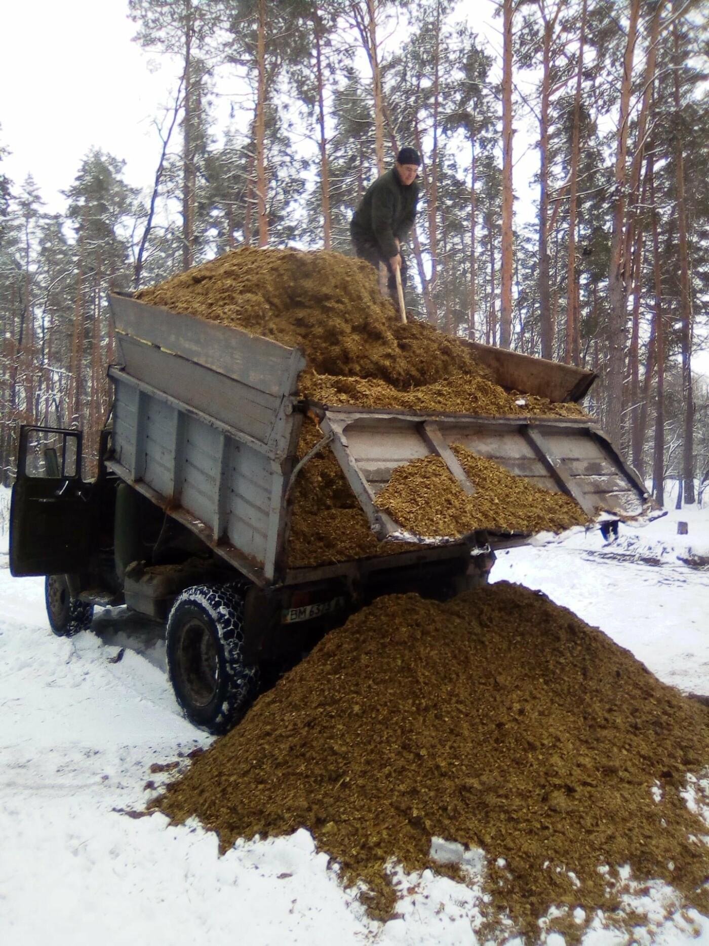 Конотопські лісівники підгодовують взимку диких тварин+ФОТО, фото-1