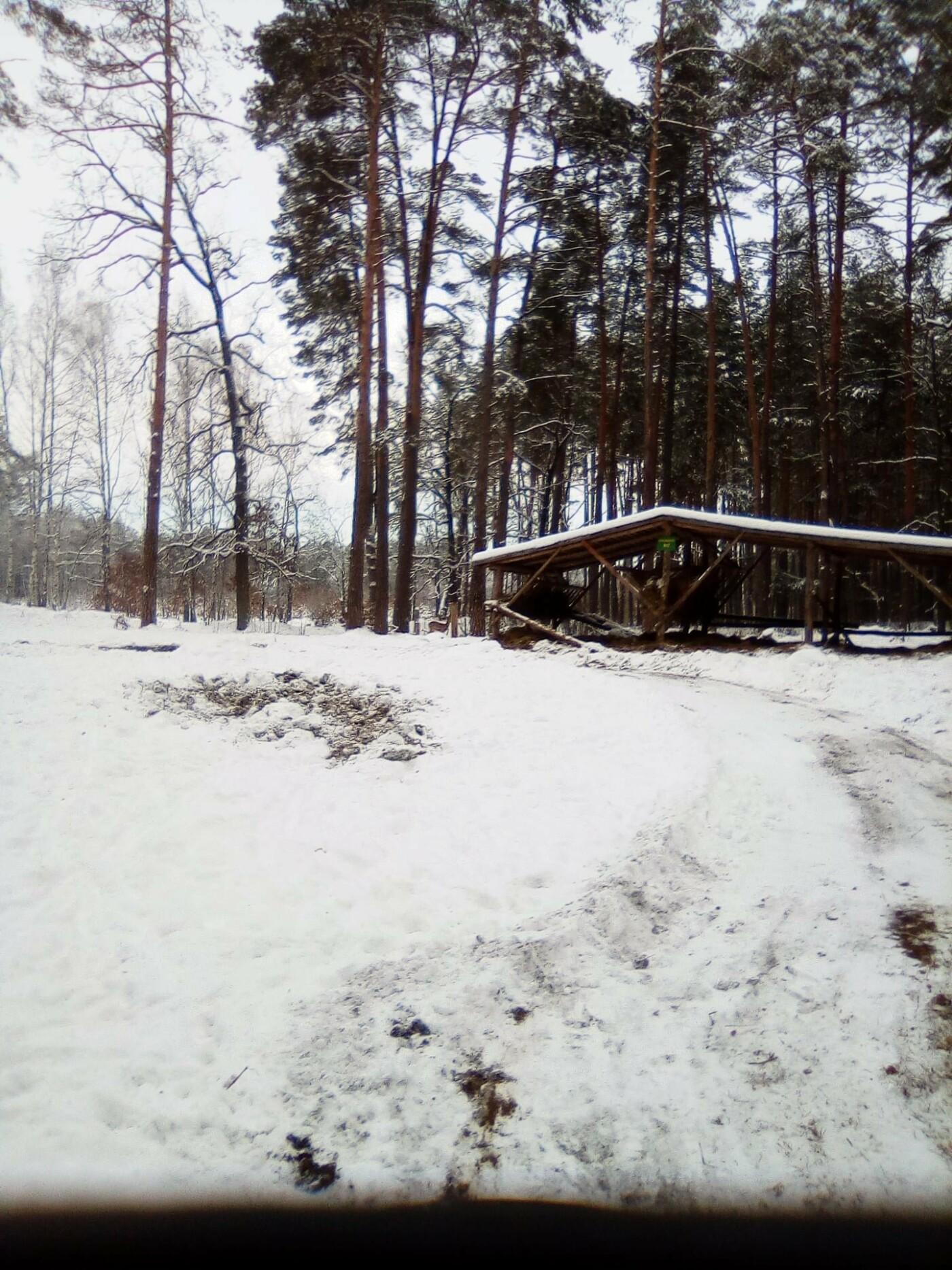 Конотопські лісівники підгодовують взимку диких тварин+ФОТО, фото-5