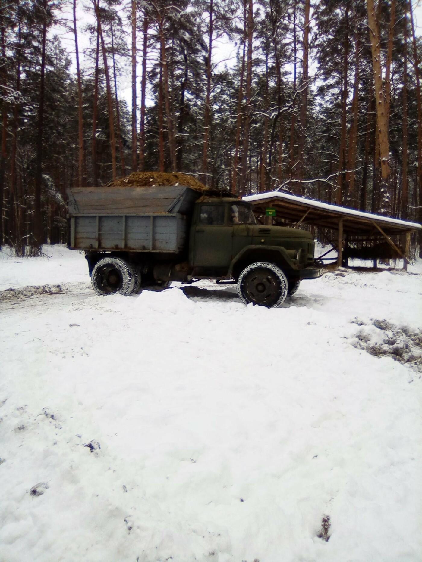 Конотопські лісівники підгодовують взимку диких тварин+ФОТО, фото-11