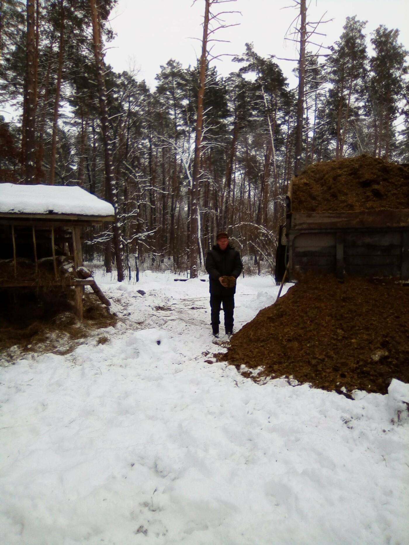 Конотопські лісівники підгодовують взимку диких тварин+ФОТО, фото-10