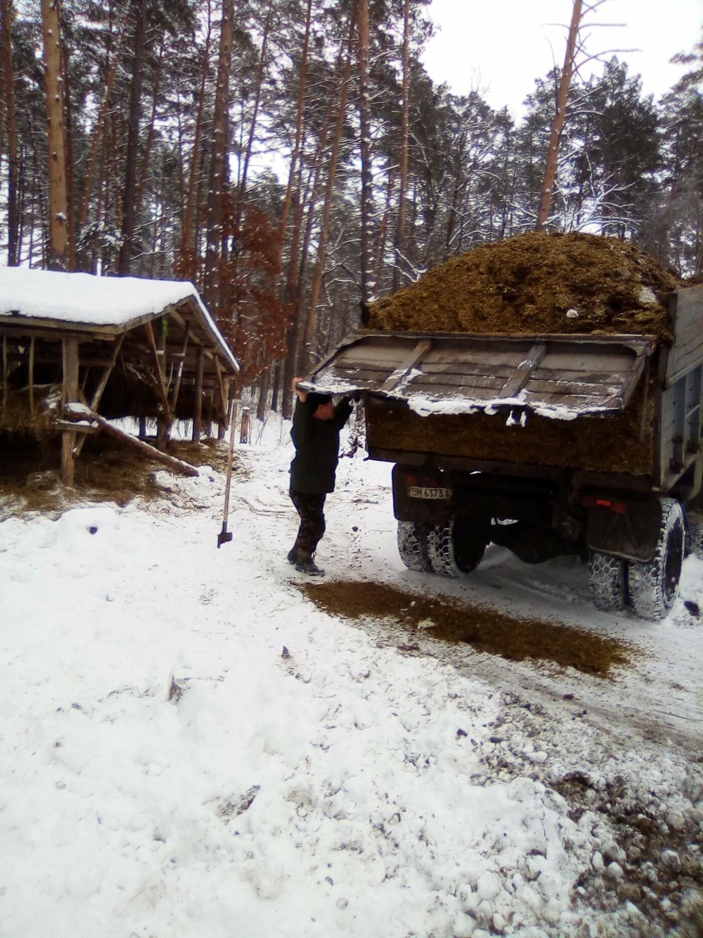 Конотопські лісівники підгодовують взимку диких тварин+ФОТО, фото-9