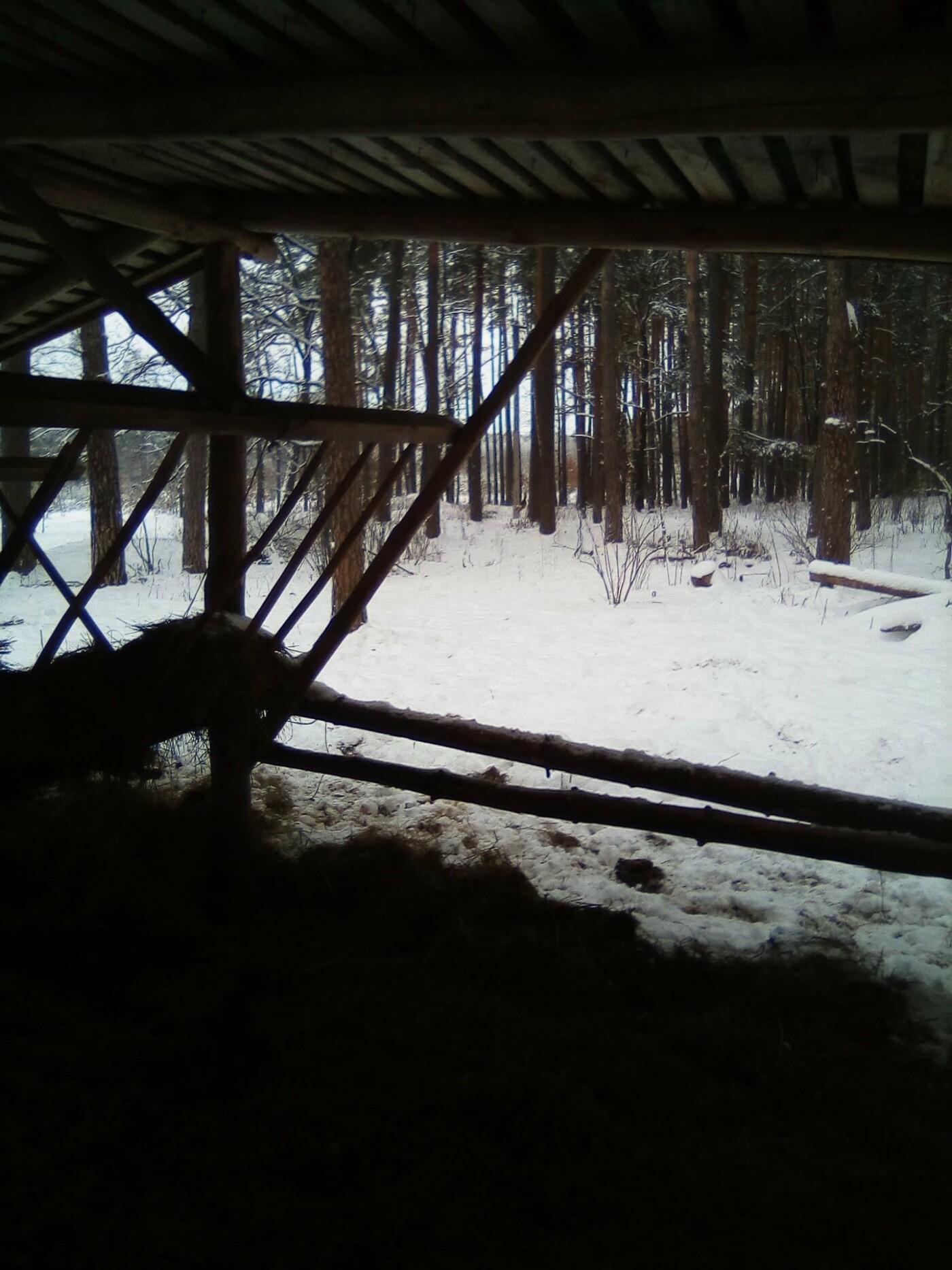 Конотопські лісівники підгодовують взимку диких тварин+ФОТО, фото-8